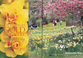 Daffodil Hill, article